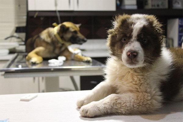 شرایط زندگی حیوانات بی خانمان شهری را ببنید، اثری اپیزودیک