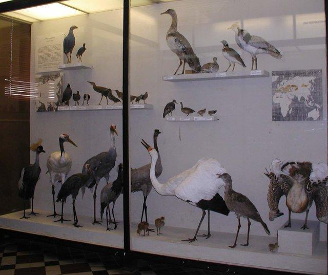 با موزه جانورشناسی دانشگاه دولتی مسکو آشنا شویم