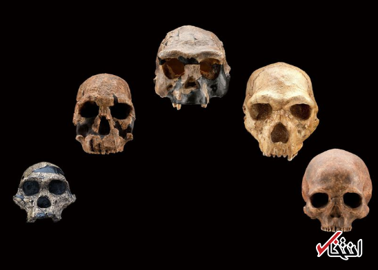 شناسایی ژن های باستانی انسان با یاری هوش مصنوعی