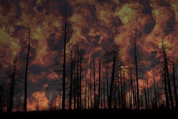 فراوری ژل ویژه برای جلوگیری از آتش سوزی جنگل ها