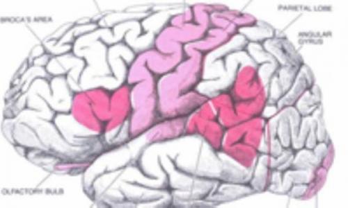 مغز همان مخ نیست!